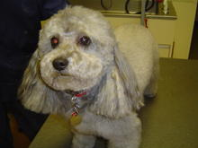 Dog Grooming in Colorado Springs 02