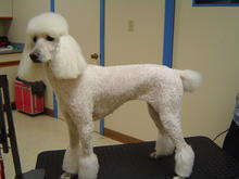 Dog Grooming in Colorado Springs 03